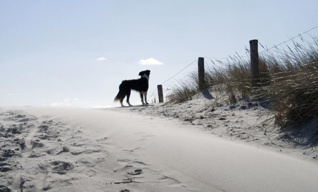 A journey on the isle of Vlieland.