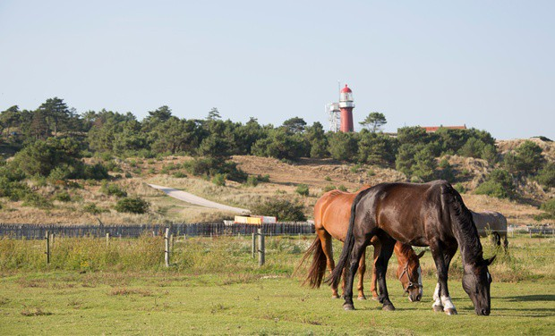 A lot to explore on the isle of Vlieland